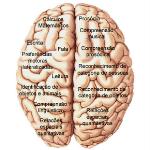 Os hemisférios cerebrais