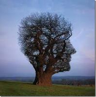 Combinar PNL e Mindfulness